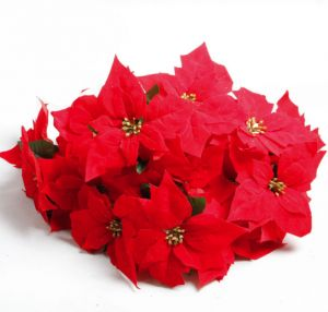 Sale On Christmas Flowers Peruccilittle Green Houseqings Uae