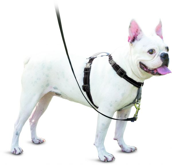 PetSafe 3in1 Harness, from the Makers of the Easy Walk Harness ...