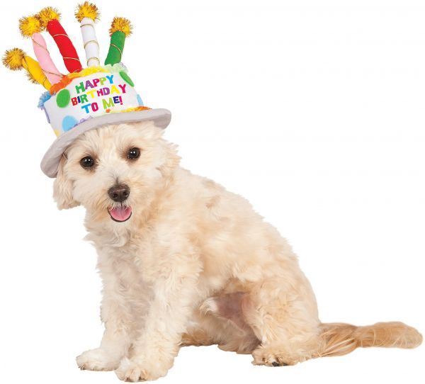 Birthday Cake Hat For Pet Small Medium